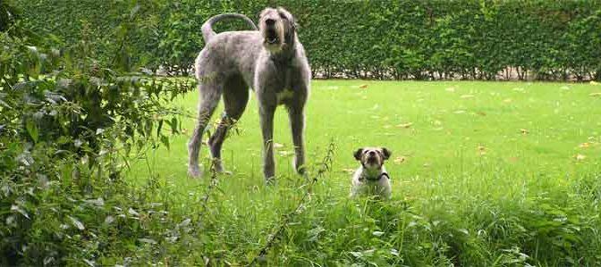 Honden Informatie Overzicht