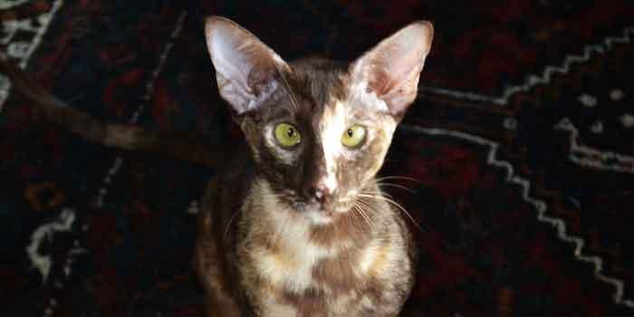 Katten Informatie Overzicht Advies en Tips
